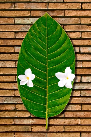 nervation: The Green leaf with white flower on brick wall background