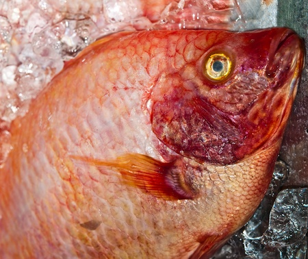 The Closeup of red fish photo