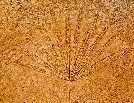 The Imprint leaf on cement floor background photo