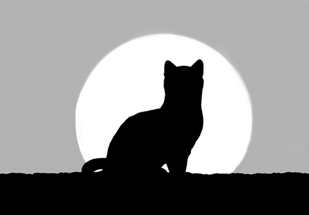 The Silhouette of cat with sunset photo