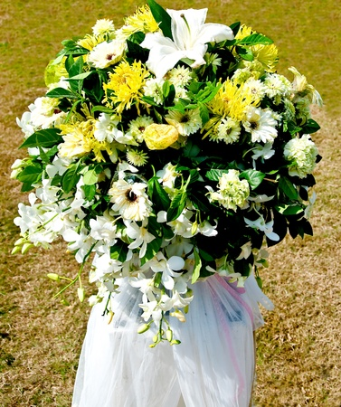 The Fresh white and yellow flowers photo