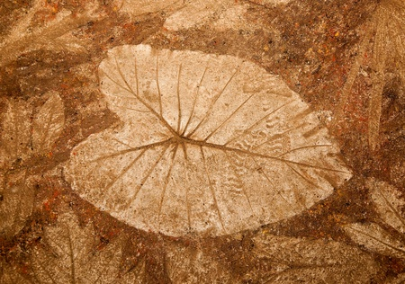 The Imprint of leaf on cement floor photo