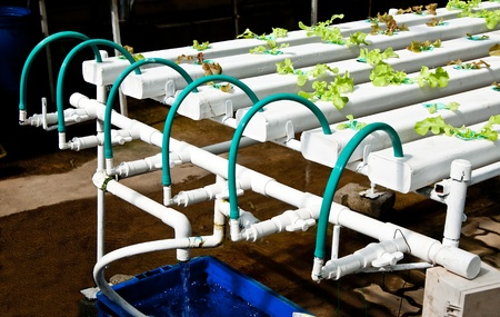 The Organic hydroponic vegetable garden Stock Photo