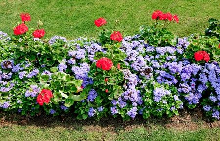 virágágy: A kerítés dísznövény