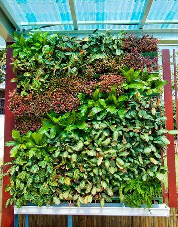The Art of ornamental plants photo