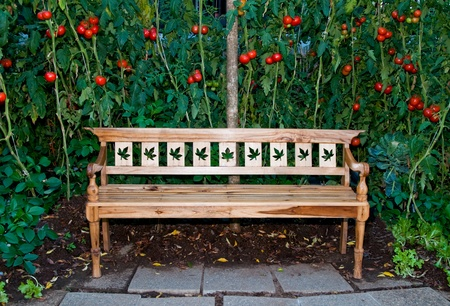 sturdy: The Wooden bench on tomato garden background Stock Photo