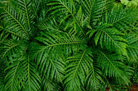 The Palm leaf background
