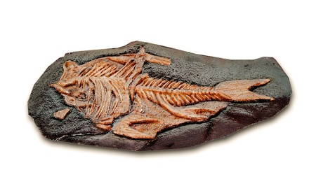 model fish: The Model fossil of ancient fish