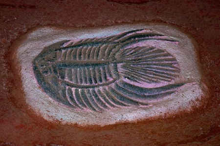 The Model fossil of fish photo