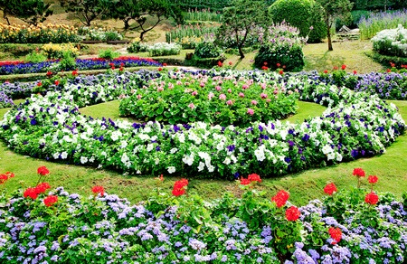 The Garden ornamental at chiangrai province,Thailand Stock Photo - 13239265