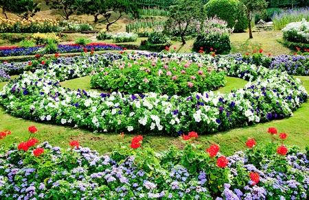 The Garden ornamental at chiangrai province,Thailand photo