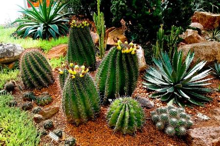 The Cactus photo