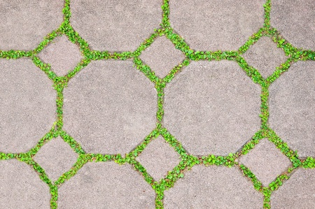 The Cement brick between green grass background photo