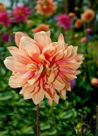 The Beautiful orange flower photo