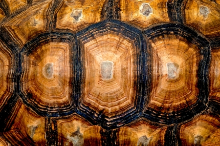 turtle: Close up view of the hexagonal texture of a turtle shell