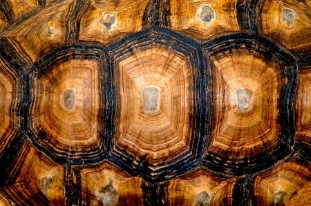 schildkroete: Nahaufnahme der hexagonalen Struktur von einem Schildkr�tenpanzer Lizenzfreie Bilder