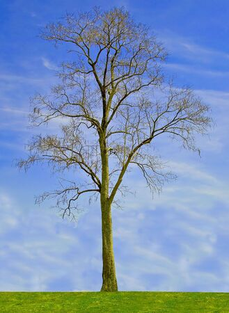One tree on blue sky background photo