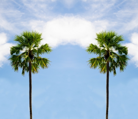 Two palm tree on sky background photo