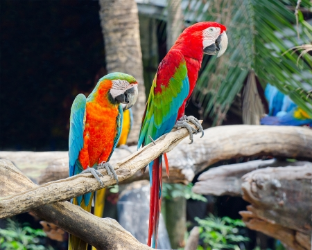 Beautiful of macaw photo