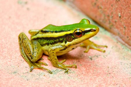 Small green frog photo