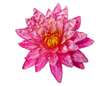 Pink lotus isolated on white background Stock Photo - 21405542