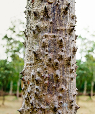 arbol de problemas: Bombax árbol