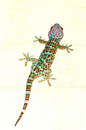 The Gecko photo