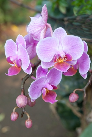 Fresh purple orchid photo