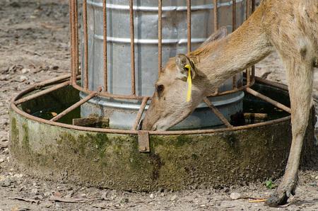 feeder: Feeder water for deer Stock Photo