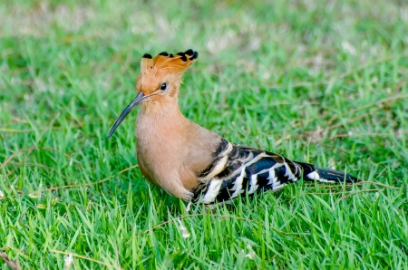 Beautiful of young woodpecker Stock Photo - 23210567