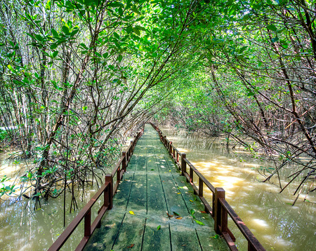 Wooden bridge along mangrove forest in thailand photo