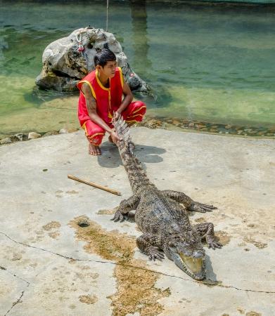 samutprakarn: SAMUTPRAKARN,THAILAND-OCTOBER 27: crocodile show at crocodile farm on OCTOBER 27, 2013 in Samutprakarn,Thailand.  This show is very exciting of tourist and thai people.