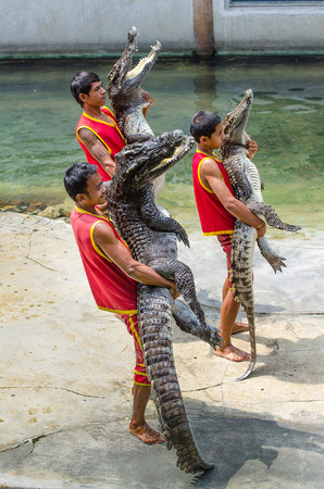 SAMUTPRAKARN,THAILAND-OCTOBER 27: crocodile show at crocodile farm on OCTOBER 27, 2013 in Samutprakarn,Thailand.  This show is very exciting of tourist and thai people.