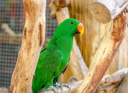 Beautiful of green parrot photo
