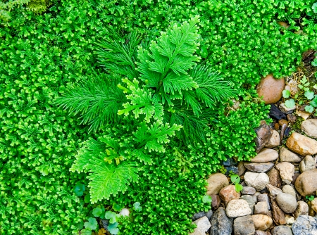 Beautiful of fern in the garden Stock Photo - 24351134
