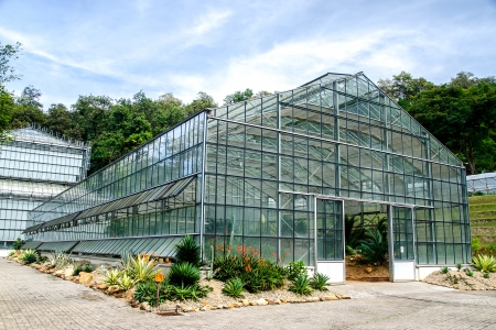 Green house of cactus