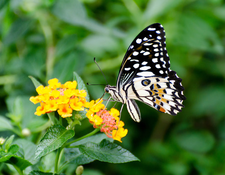 Beautiful of butterfly in garden photo