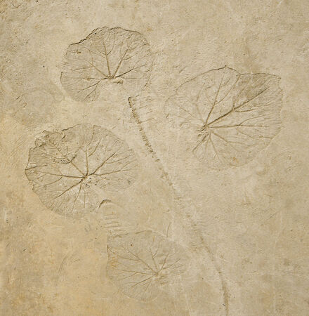imprint: Imprint leaf on cement floor background Stock Photo