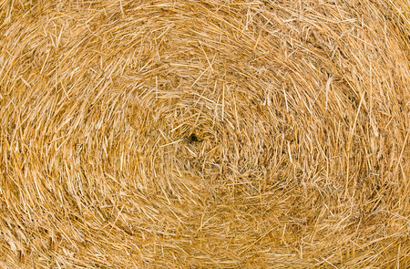 Dried brown hay background texture photo