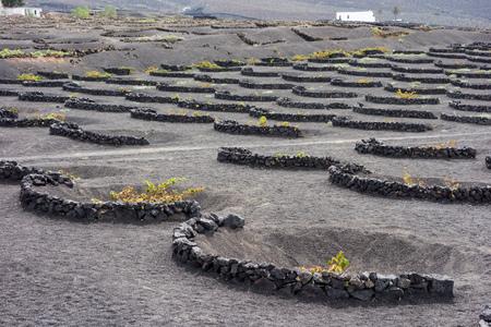 lanzarote: Ground level vineyards in La Geria, Lanzarote, Canary Islands, Spain Stock Photo