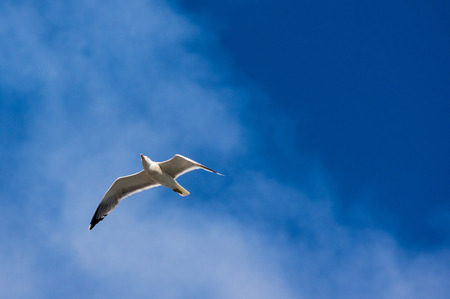 glide: A seagull flying in a blue sky