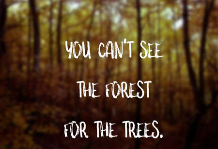You cant see the forest for the trees