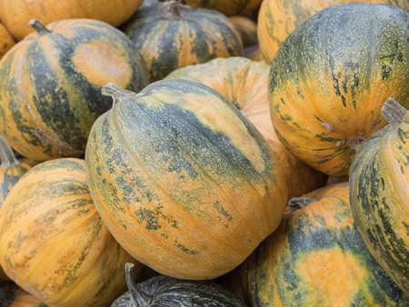 cucurbit: Harvest: Heap of Styrian oil pumpkin, Cucurbita pepo styriaca Stock Photo