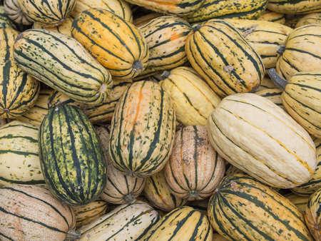 cucurbit: Harvest: Heap of US American Delicata Squash, peanut squash, Cucurbita pepo Stock Photo