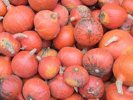cucurbit: Harvest: Heap of Japanese Red Kuri Squash, Hokkaido, Cucurbita maxima