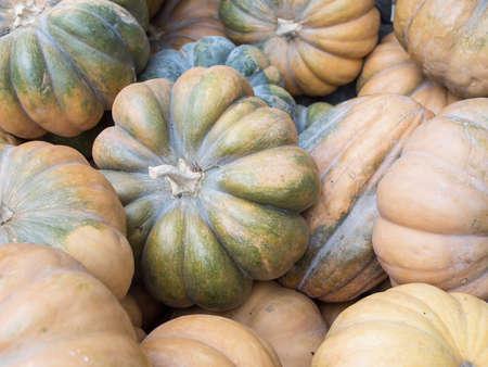 cucurbit: Harvest: Heap of Musquee De Provence Pumpkin, Cucurbita moschata