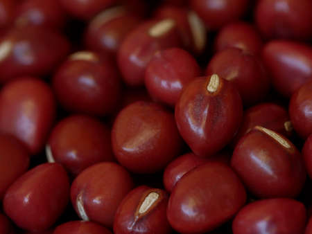 Close-up of Adzuki Beans, Vigna angularis, Selected Focus Food Background