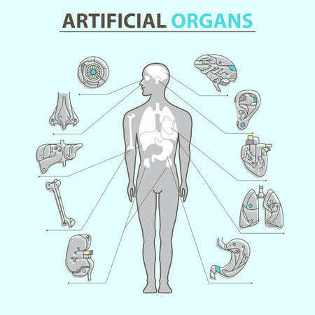 transplants: Artificial organs. Vector illustration EPS 10 Isolated objects Illustration