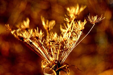 涼しい秋の風が、地球全体をブラッシングします。 写真素材