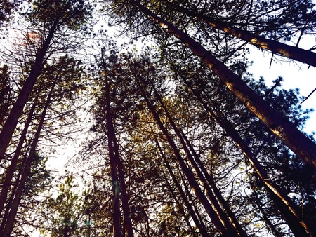 up: Looking up through the trees